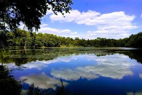 Photo d'un étang de Sologne pour illustrer l'importance de la nature dans les environs d'Orléans dans le Val de Loire, France.